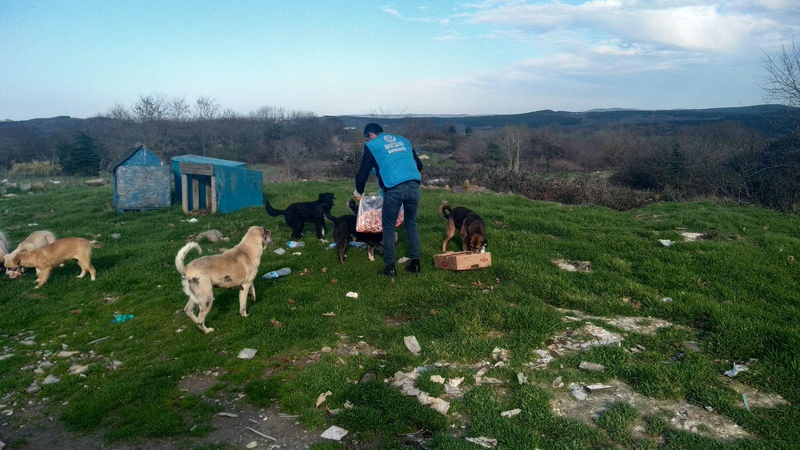 Pendik'te Sokak Hayvanlarına Yardım