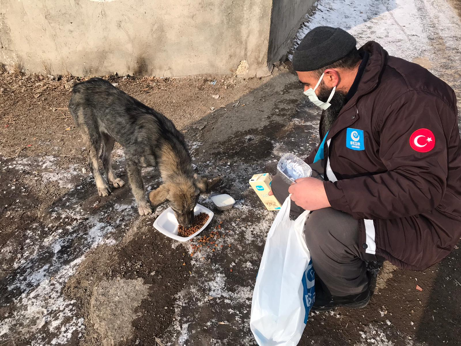 Ağrı'da Sokak Hayvanlarına Yardım