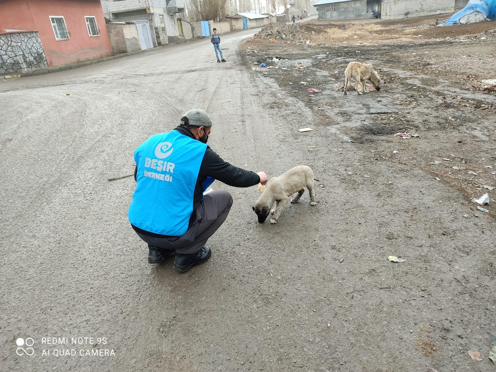Ağrı Temsilciliğimizden Sokak Hayvanlarına Yardım