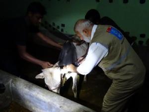 ,Bangladeş Faaliyetleri